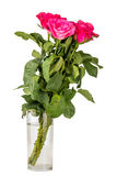 Roses in glass isolated on Stock Photo