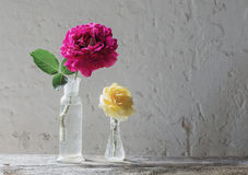 Roses in a glass vase on background  wall Royalty Free Stock Photography