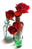 Roses in Glass Vases Stock Photography