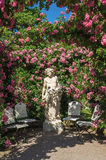 Roses and gods statue in the rose garden Beutig in Baden-Baden Royalty Free Stock Images