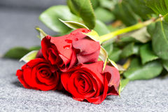 Roses on grave. Three red roses on a grave Stock Image