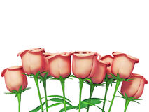 Roses for great celebrations Stock Photo