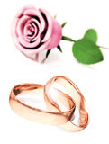 Roses for great celebrations Stock Images