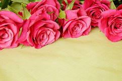 Roses on green background Royalty Free Stock Photography