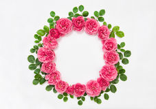 Roses with green leaves isolated pink flower head wreath Stock Photo