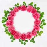 Roses with green leaves isolated pink flower head wreath Stock Photos