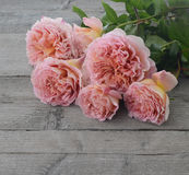 Roses on grey wood Stock Photos
