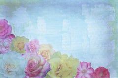 Roses on grunge background Stock Photos