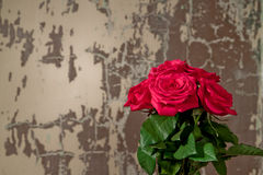 Roses  and grunge wall. Red roses in front of a cracked grunge wall Royalty Free Stock Photos