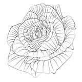 Roses. Hand drawn flower Royalty Free Stock Photography