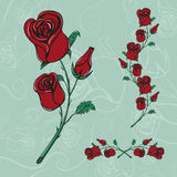 Roses hand drawn realistic sketch Royalty Free Stock Photography