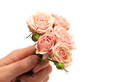 Roses in hand isolated on white background Stock Photos