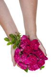 Roses in hands Royalty Free Stock Photos