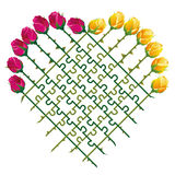 Roses Heart Love Puzzle. Roses that shape a heart and a jigsaw puzzle with their thorny stalks, as a symbol for matters of love.  vector illustration on white Stock Photos