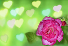 Roses and Hearts background Royalty Free Stock Photos