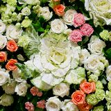 Roses horizontal backgound royalty free stock images
