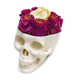 Roses into an human skull. Isolated on white background Royalty Free Stock Images