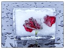 Roses in ice Stock Photography