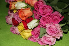 Roses II Stock Photos