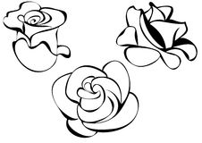 Roses  illustration. Black lines styled roses Royalty Free Stock Photos