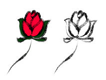 Roses Illustration. Hand drawn roses, outline and colored design vector illustration