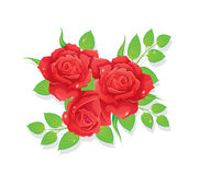 Roses illustration Royalty Free Stock Image