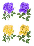 Roses. Illustration roses ,made watercolor . on white background Royalty Free Stock Images