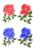 Roses. Illustration roses ,made watercolor . on white background Stock Images