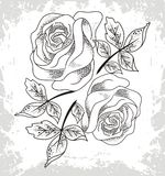 Roses image Stock Photography