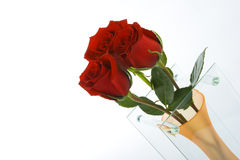 Roses In The Vase Royalty Free Stock Photography