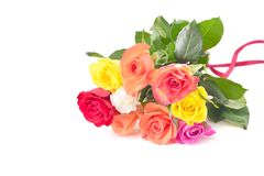 Roses isolated on white. Royalty Free Stock Photos