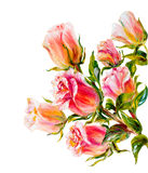 Roses isolated on white, oil painting Stock Image
