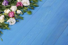 Roses japonaises dans le coin gauche supérieur sur un fond en bois bleu Photographie stock libre de droits