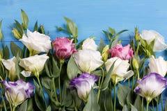 Roses japonaises de différentes sortes dans les baisses du mensonge en gros plan de l'eau dans une rangée sur un fond bleu Photos libres de droits