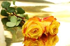 Roses jaunes Photos libres de droits