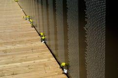 Roses jaunes au mur Photo libre de droits