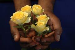 Roses jaunes dans des mains Photographie stock libre de droits