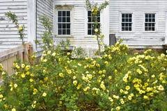 Roses jaunes fleurissant devant la Maison Blanche  photos libres de droits
