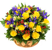 Roses jaunes naturelles et iris bleus dans un panier Photos stock