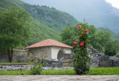 Roses in Kosovo. Some flowers in a beautifil garden in Peje, Kosovo stock photography