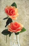 Roses on Lace Stock Photos