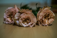 Roses. Laying on the floor Royalty Free Stock Photography