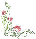Roses, leaf, floral Royalty Free Stock Photos