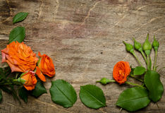 Roses with leaves frame Royalty Free Stock Images
