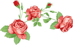 Roses with leaves Royalty Free Stock Photos
