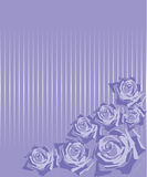 Roses on a lilac background in a strip Royalty Free Stock Photos