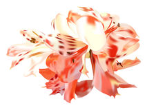 Roses lilies Stock Photo