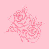 Roses line art drawing with hand drawn in pink theme. Royalty Free Stock Photo