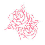 Roses line art drawing with hand drawn in pink theme. Royalty Free Stock Image