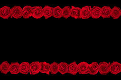 Roses lines black background Stock Photo